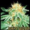 white widow 2.jpg