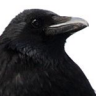 DisguisedCrows