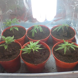 first month clones
